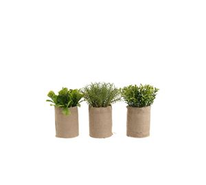 Cosy Home - S/3 Φυτό INART cosy home   είδη σπιτιού